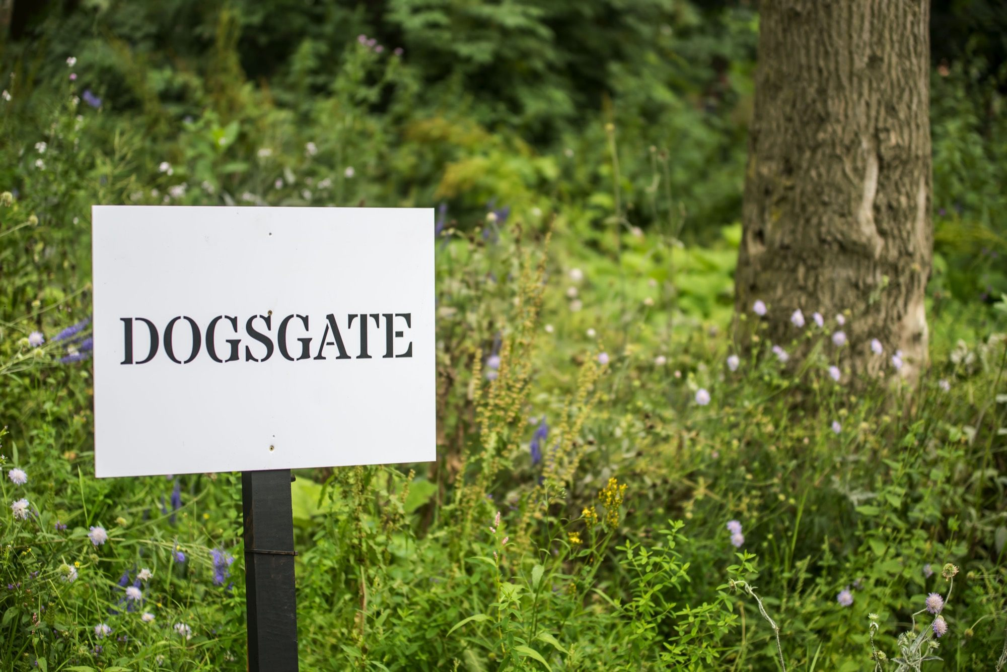 'dogsgate' sign