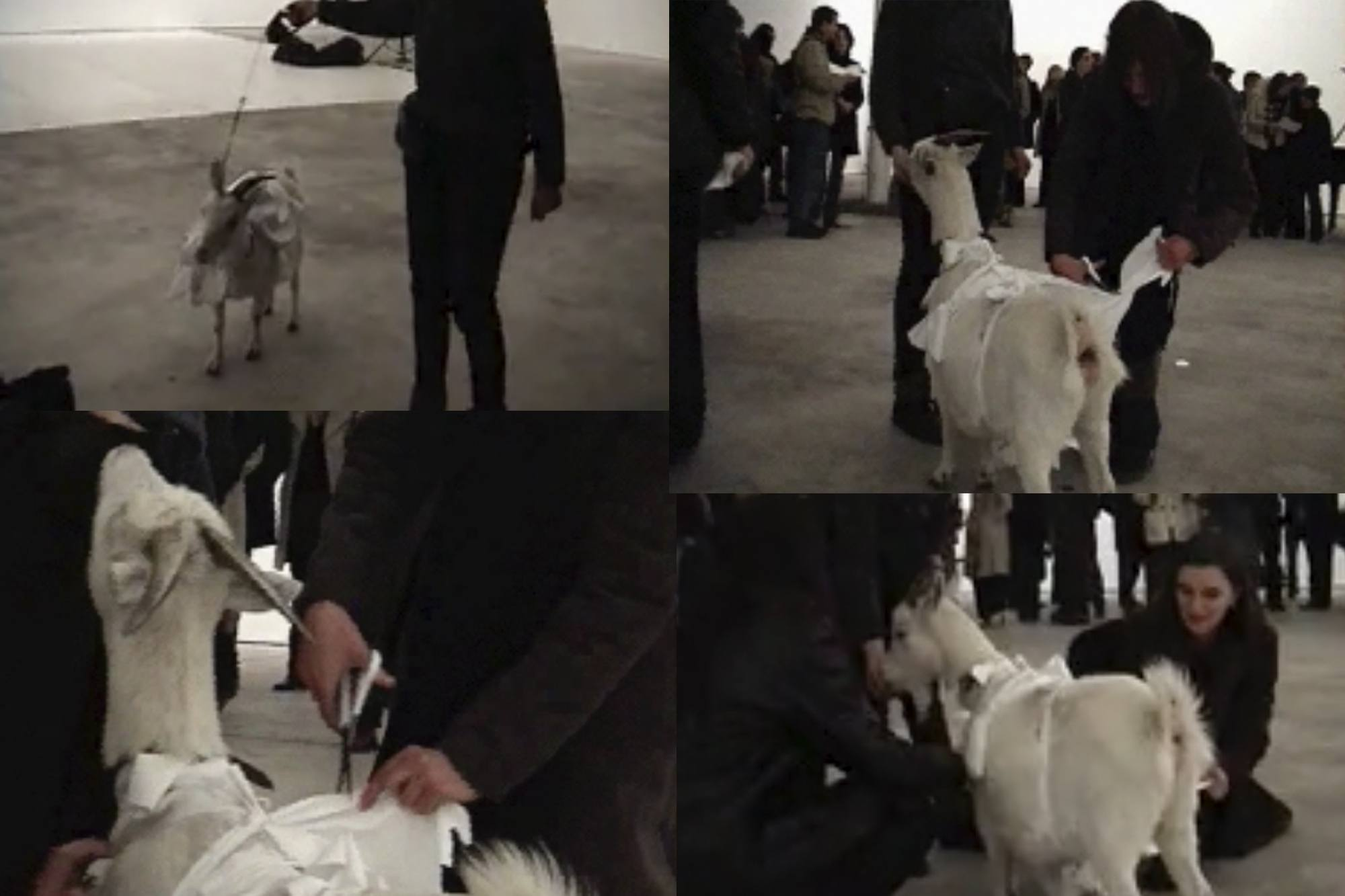 A composite image of audience members approaching a goat wearing a t shirt, recreating Yoko Ono's cut piece (1964).